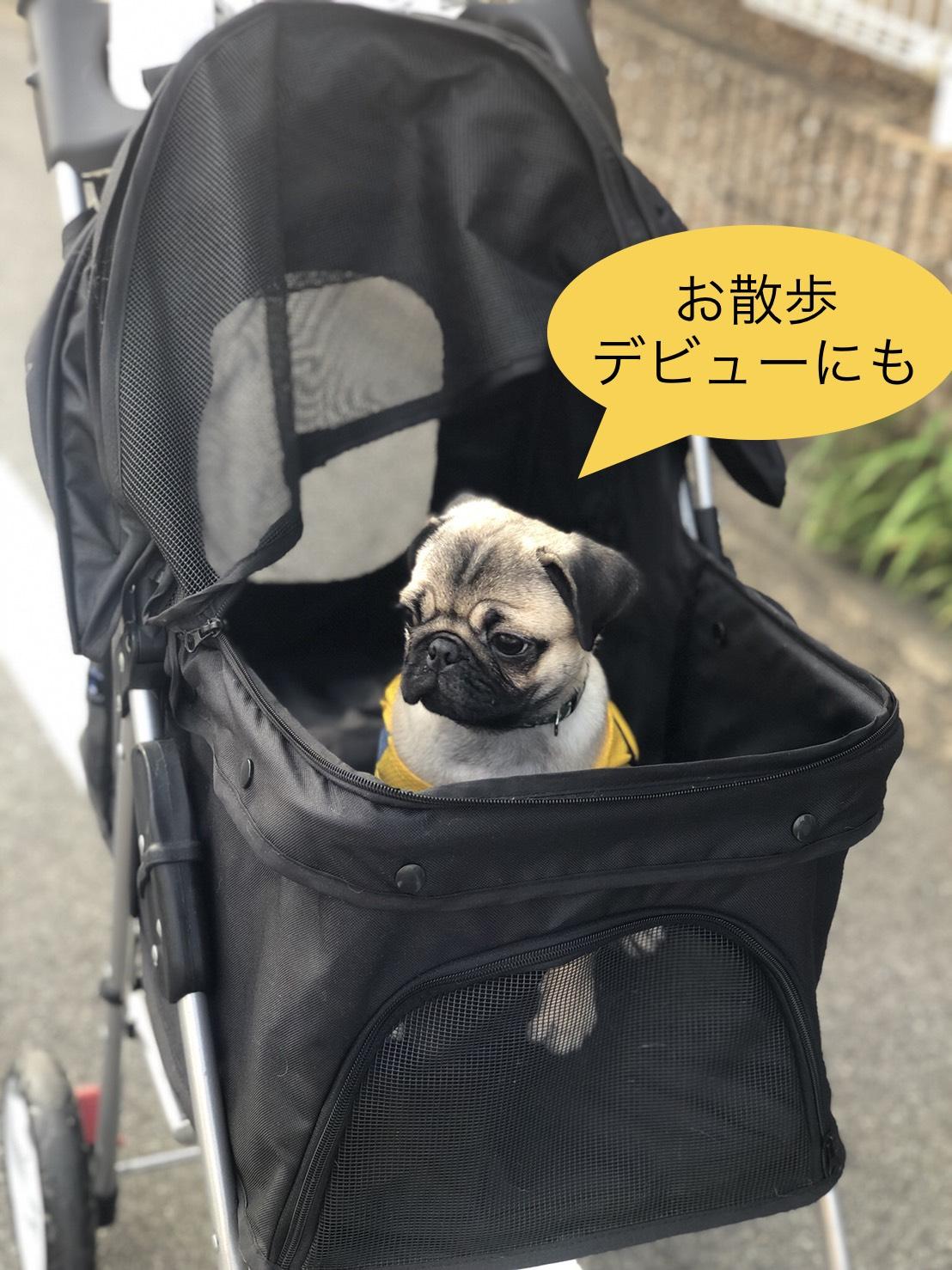 赤ちゃんパグを乗せた写真