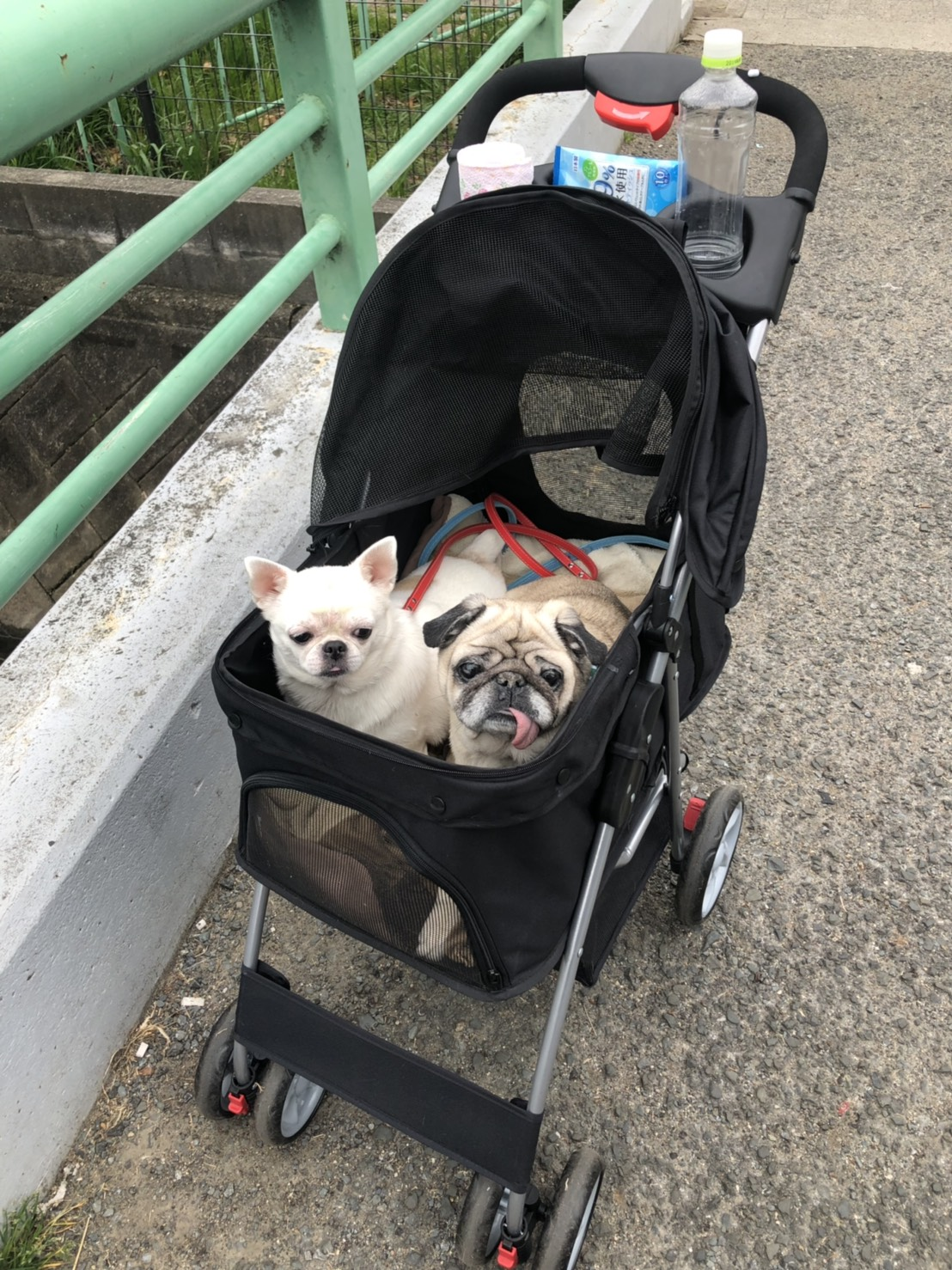 犬用バギーの写真